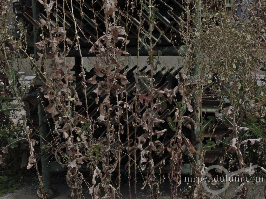Shunned Decay by MrPendulum